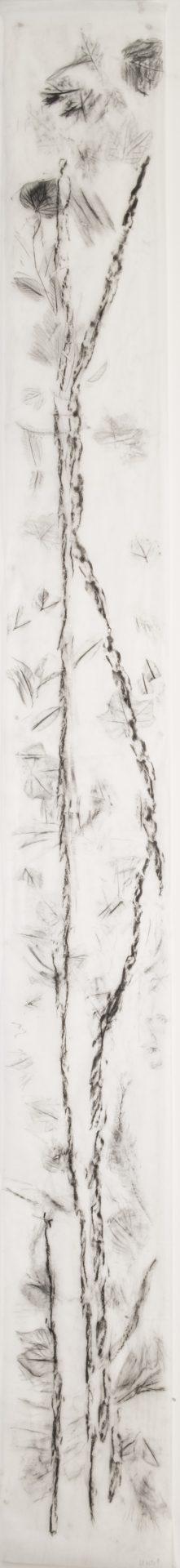 Scala Naturale<br>MMG13<br>misure: 33 x 300 cm<br>tecnica: Carboncino su carta giapponese<br>anno: 2018<br><br>DISPONIBILE