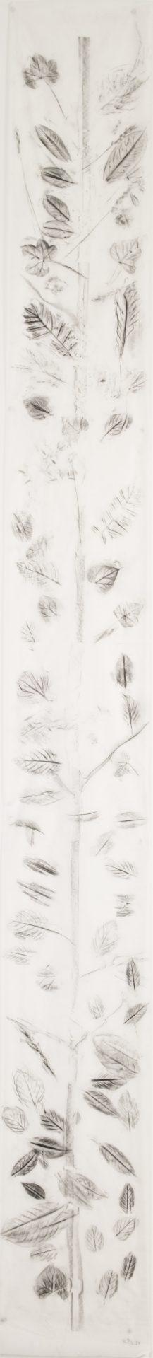 Scala Naturale<br>MMG14<br>misure: 33 x 300 cm<br>tecnica: Carboncino su carta giapponese<br>anno: 2018<br><br>DISPONIBILE