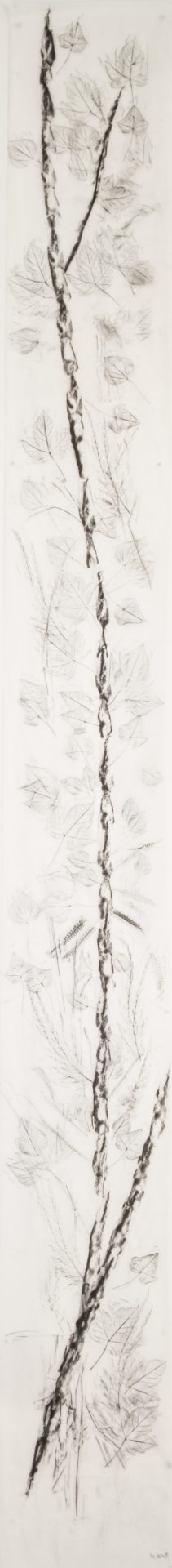 Scala Naturale<br>MMG17<br>misure: 33 x 300 cm<br>tecnica: Carboncino su carta giapponese<br>anno: 2018<br><br>DISPONIBILE